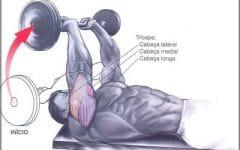 Tríceps Testa