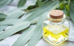 Os 10 Benefícios do Óleo de Eucalipto Para Saúde
