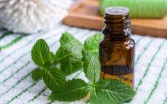 Os 10 Benefícios do Óleo de Hortelã-Pimenta Para a Saúde