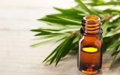 Os 10 Benefícios do Óleo de Melaleuca Para Saúde