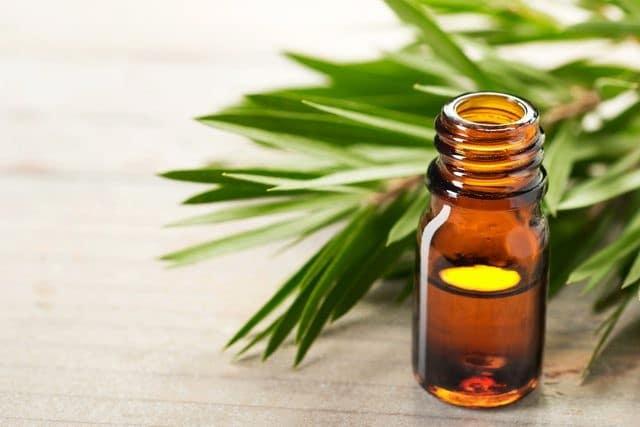 Beneficios do oleo de Melaleuca