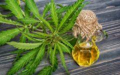 Os 12 Benefícios do Óleo de Cannabis Para Saúde
