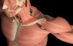 Os 10 Principais Tipos de Distrofia Muscular!