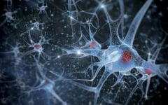 Os 7 Principais Sintomas de Esclerose Lateral Amiotrófica
