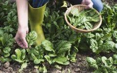 8 Benefícios do Espinafre – Para que Serve e Propriedades do Espinafre!