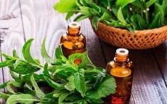 Os 10 Benefícios de Hortelã-Pimenta Para Saúde