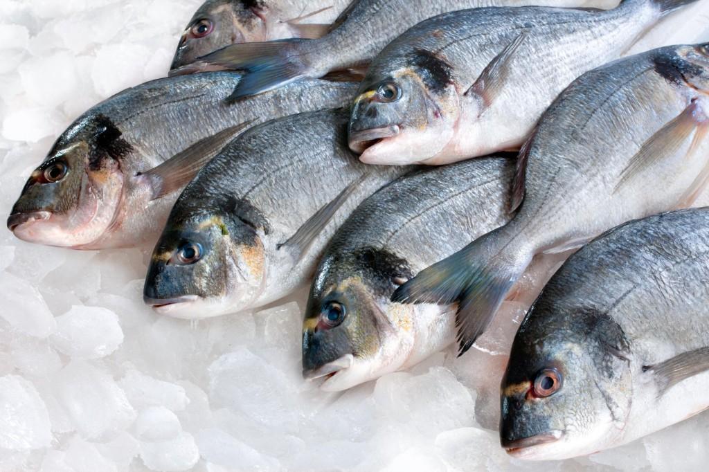 Beneficios do Peixe