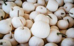 Os 10 Benefícios da Abóbora Branca Para Saúde