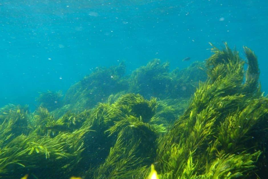 Benefícios Das Algas Marinhas