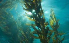 Os 10 Benefícios Das Algas Marinhas Para Saúde