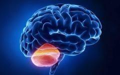 Ataxia Cerebelar Aguda – O que é, Sintomas e Tratamentos!