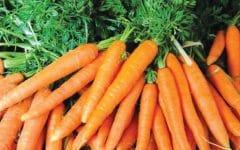 Os 13 Benefícios da Cenoura Para Saúde