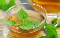 Os 10 Benefício do Chá de Erva Gateira Para Saúde
