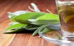 Os 15 Benefícios do Chá de Sálvia Para Saúde