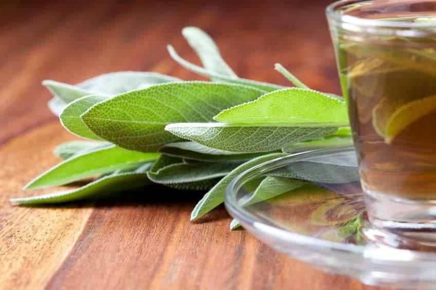 Chá de Sálvia
