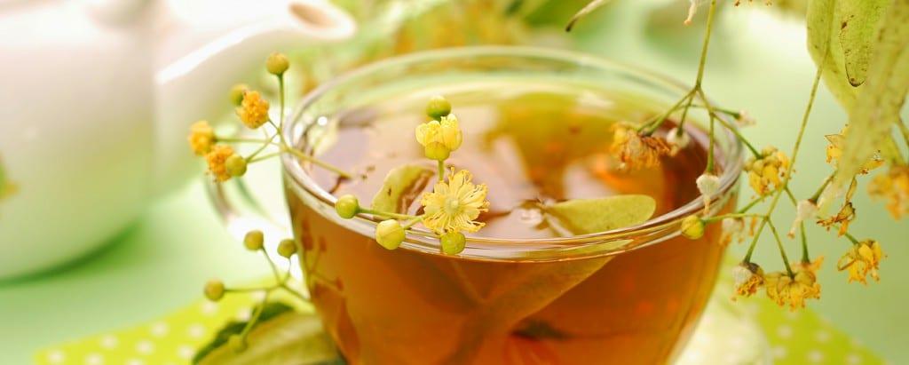 Benefícios do Chá de Carqueja