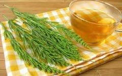 Os 10 Benefícios do Chá de Cavalinha Para Saúde