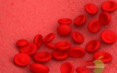 Hemoglobinopatia C – Causas, Sintomas e Tratamentos