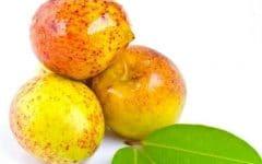 Os 10 Benefícios da Vitamina da Mangaba Para Saúde