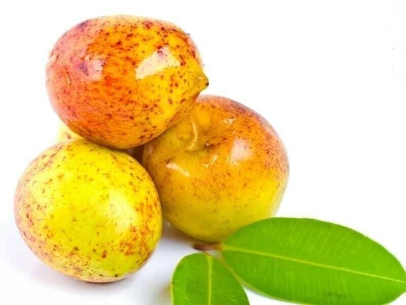 Benefícios da Vitamina da Mangaba