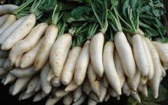 Os 10 Benefícios do Rabanete Daikon Para Saúde