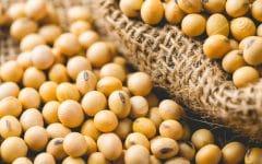 Os 32 Benefícios da Soja Para Saúde