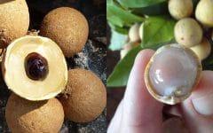 Os 10 Benefícios do Suco de Pitomba Para Saúde
