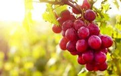 15 Benefícios da Uva Vermelha – Para que Serve e Propriedades da Uva Vermelha!