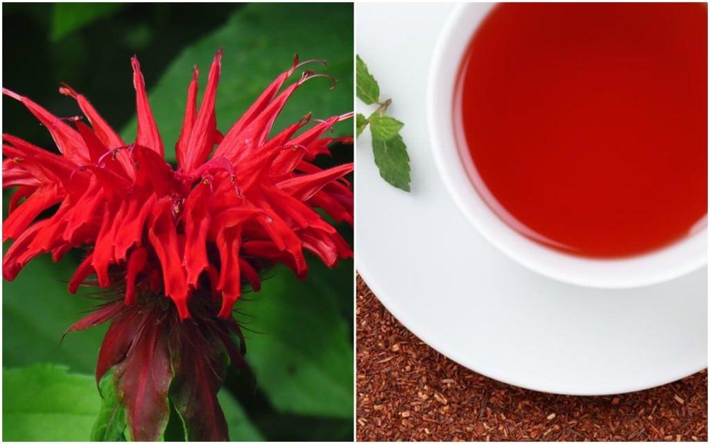 Chá de Oswego