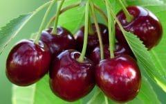 Os 14 Benefícios da Cereja Para Saúde