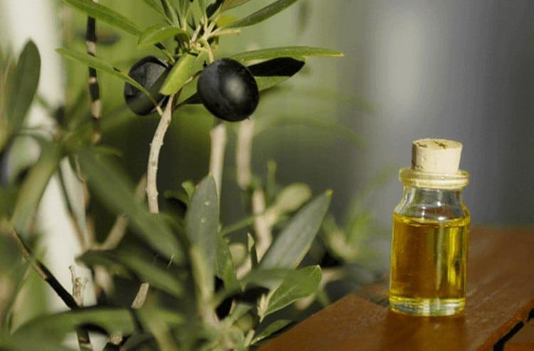 beneficios do extrato da folha de azeitona