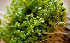 Os 5 Benefícios dos Brotos de Brócolis Para Saúde!