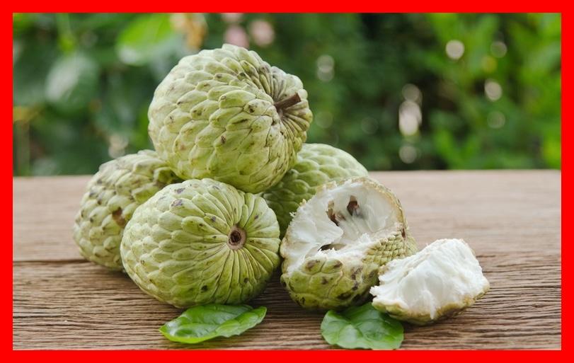 fruta do conde benefício