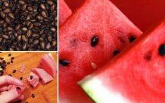 Os 10 Benefícios da Semente de Melancia Para Saúde