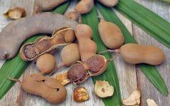 Os 8 Benefícios do Tamarindo Para Saúde