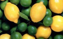 Os 4 Tipos de Limão e Seus Benefícios Para Saúde!