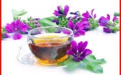 Chá de Malva Para Perder Peso em Pouco Tempo!