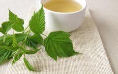Chá da Folha de Framboesa: Gravidez, Benefícios e Efeitos Colaterais!