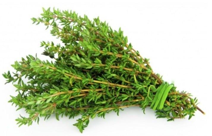 Receita de erva para combater herpes e candidíase